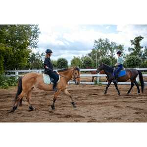 MiniatureEquitation